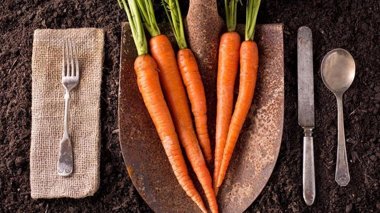 carrots on a shovel | dentist in flowery branch ga